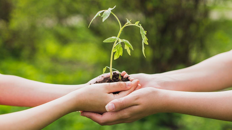 Ekolojik Benlik Gelişim Programı